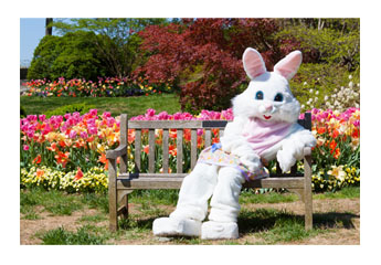 easter bunny on bench in grassy field with tulip garden behind